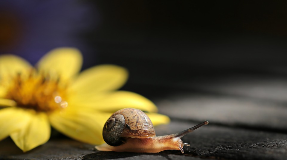 George the snail