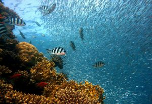 Read more about the article Coral Reefs Should be Invested in to Protect People, Structures, and More